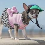 Bibity Bobity Boo è il cane più piccolo del mondo 6