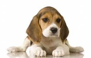 Cani e gatti aumentano l'autostima e abbassano lo stress di chi li ha