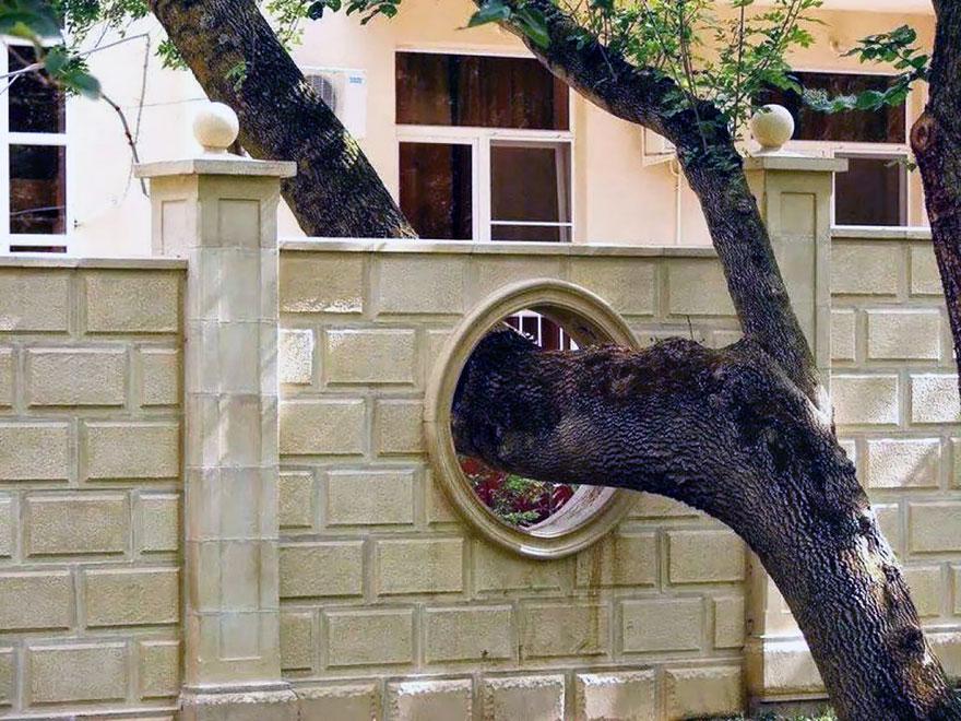 Gli edifici in cui gli architetti si sono rifiutati di tagliare gli alberi6