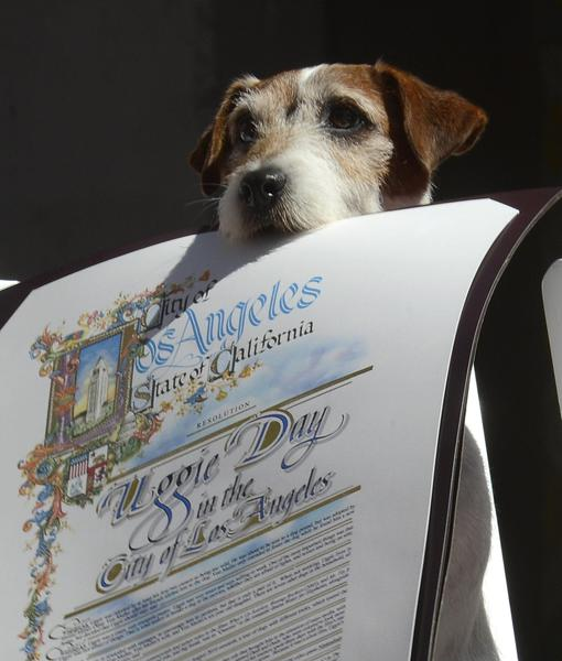 Uggie, il cane da Oscar di The Artist