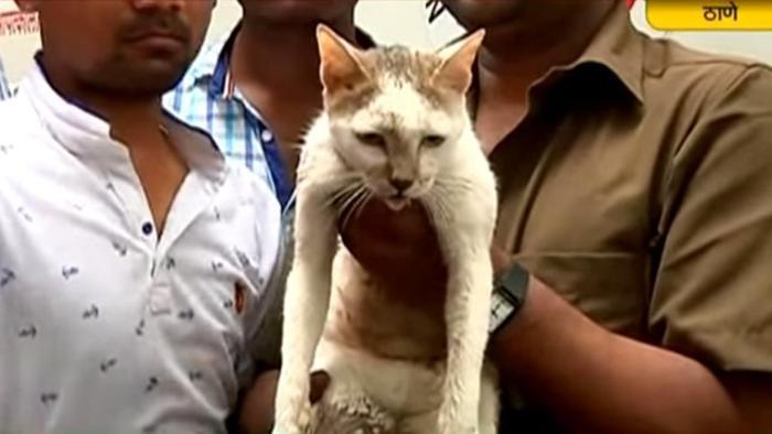 India, crolla palazzo: uomo salva la gatta di casa e muore 2