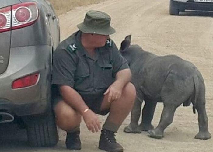 Sudafrica, cucciolo orfano di rinoceronte scambia auto per la mamma3