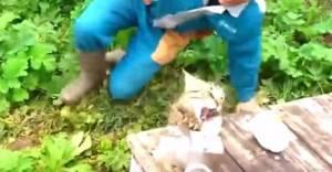 Russia, ha appena pescato un pesce: gatto si avvicina e gli ruba la preda