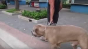 Mamma gatto allontana il cane dai suoi cuccioli VIDEO