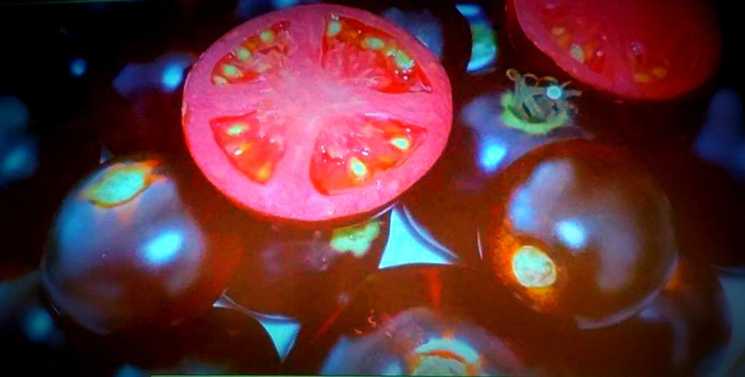 I 5 colori del benessere e il pomodoro nero che allunga la vita
