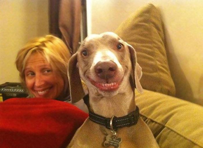 I cani ridono eccome FOTO: ecco perché111