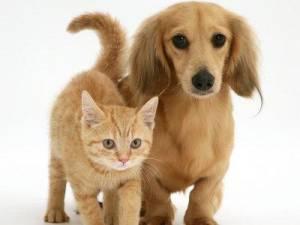 Dieta vegetariana per cani e gatti? Può essere fatale
