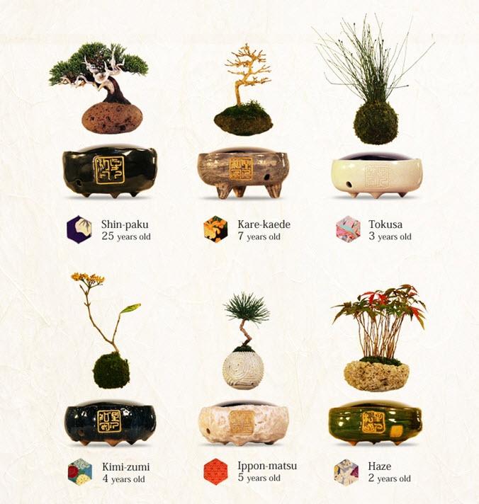 Air bonsai che levita grazie ai magneti3