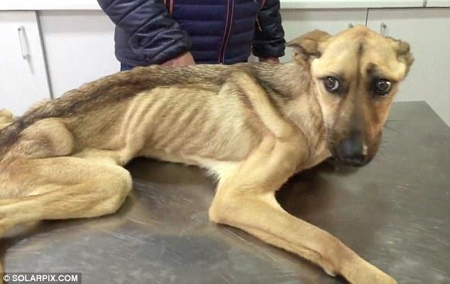 Barilla, il cane talmente magro che sembra uno spaghetto2