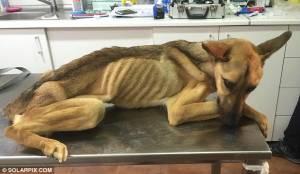 Barilla, il cane talmente magro che sembra uno spaghetto3