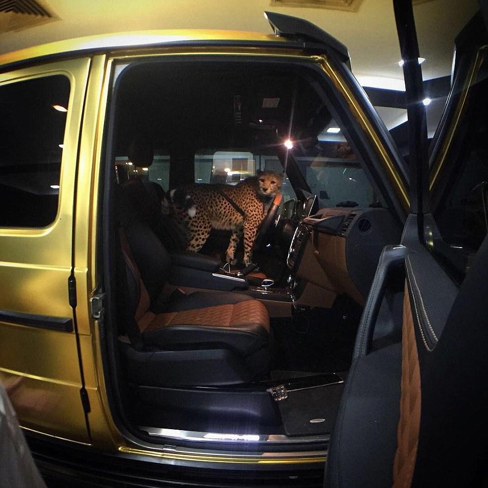 Le auto ricoperte d'oro del principe saudita4