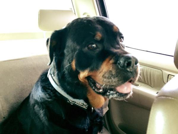 """Joss Stone rinvia il tour ai Caraibi: """"Il mio cane sta male"""""""