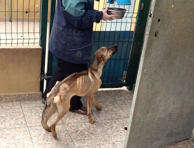 Barilla, il cane talmente magro che sembra uno spaghetto6