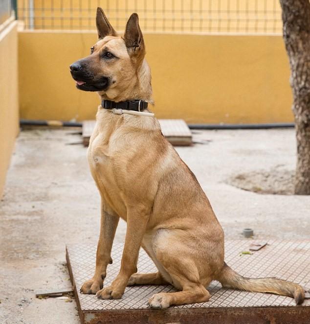 Barilla, il cane talmente magro che sembra uno spaghetto10