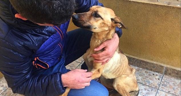 Barilla, il cane talmente magro che sembra uno spaghetto8