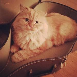 Disturbi alimentari: Annie, guarita grazie al suo gatto