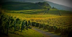 Sindaci delle Città del vino: no alle unioni tra piccoli Comuni