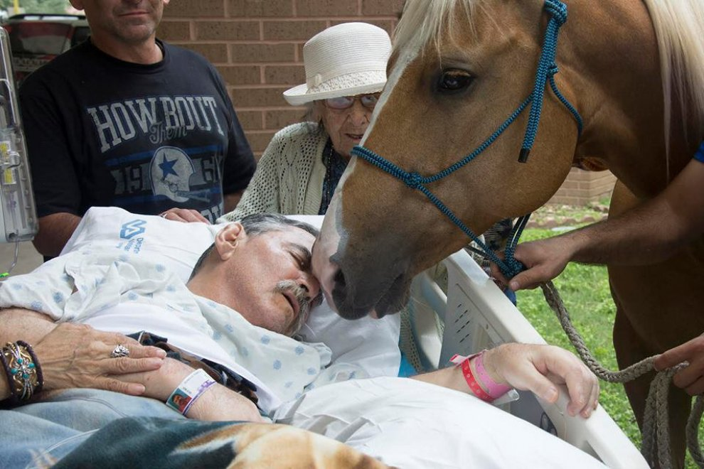 Ex veterano Vietnam, ultimo saluto ai suoi cavalli 2