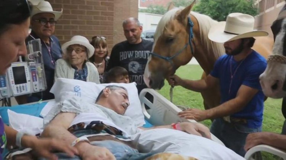 Ex veterano Vietnam, ultimo saluto ai suoi cavalli 4