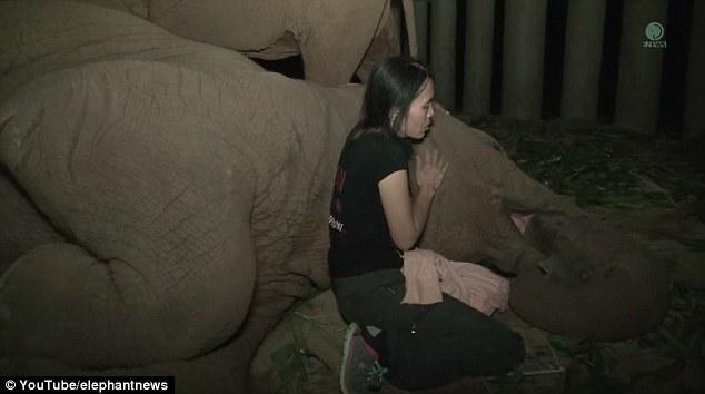 Ninna nanna custode, elefante crolla e dorme come un bimbo7