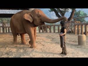Ninna nanna custode, elefante crolla e dorme come un bimbo3