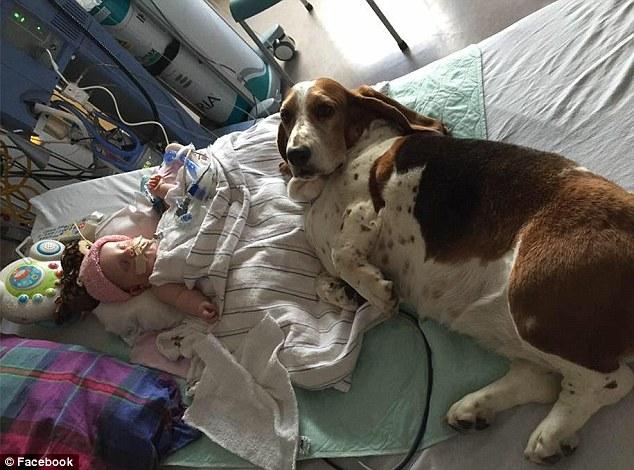 Nora, neonata colpita da ictus muore con suoi cani ai piedi 9