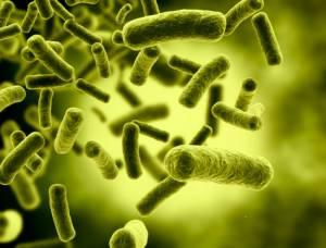 Batteri, l'allarme: nel 2050 uccideranno più dei tumori