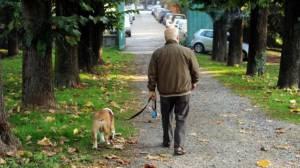 Un cane allunga la vita: camminare con lui fa bene anche a noi
