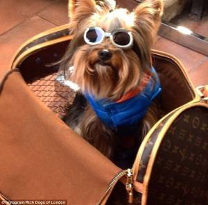 Rich Dogs of Instagram: cani su yacht e jet privati8