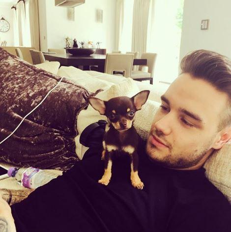 One Direction, Liam Payne allarga la famiglia. Lui e Cheryl...