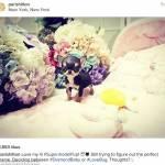 Paris Hilton, nuovo chihuahua indigna web6