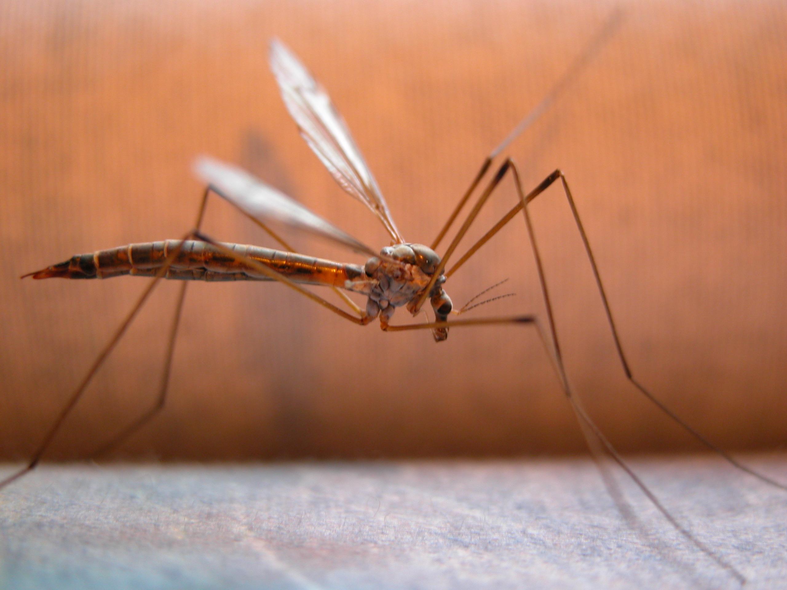Malaria, i farmaci non bastano più: primi casi di resistenza
