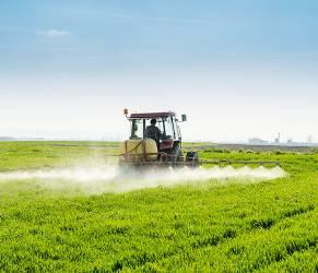 Glifosato, rischi anche per chi vive in città: pesticida nel cibo