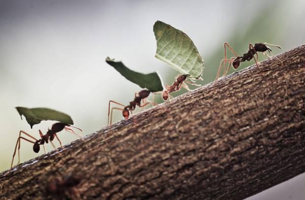 Formiche in casa, cause e rimedi: parla l'esperto