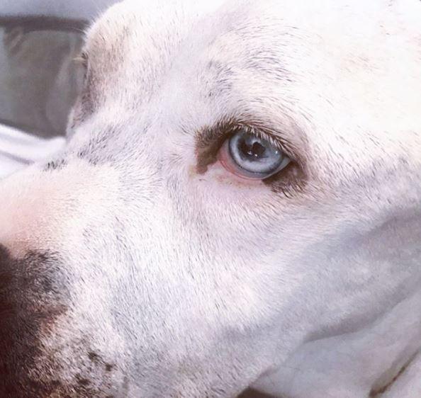 """Jessica Alba piange la morte del cane Bowie: """"Nostra dolce ragazza"""""""
