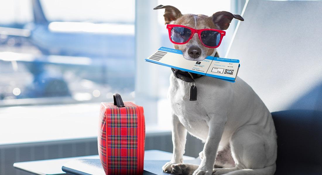 Animale in vacanza: lui ha paura? 8 consigli per farlo sentire al sicuro