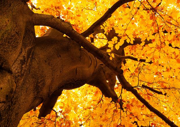 Non vedi l'ora che arrivi l'autunno? C'è una spiegazione scientifica