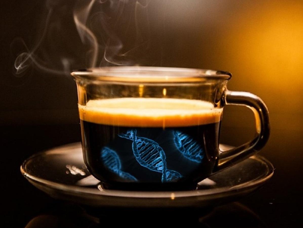 Caffè alleato del dimagrimento: 4 tazze anti grasso