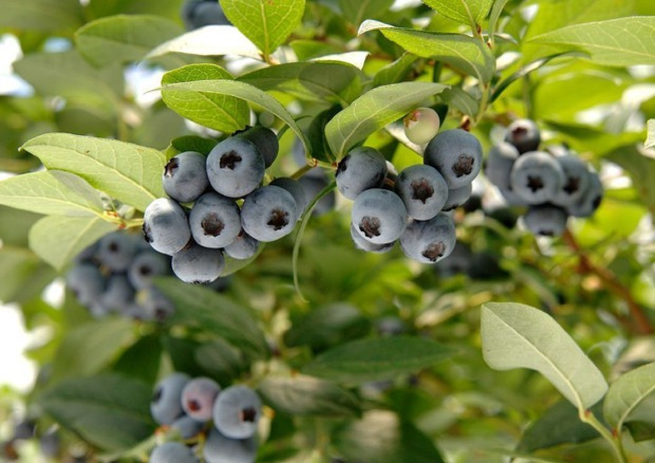 Dimagrire, la frutta low carb con pochi zuccheri