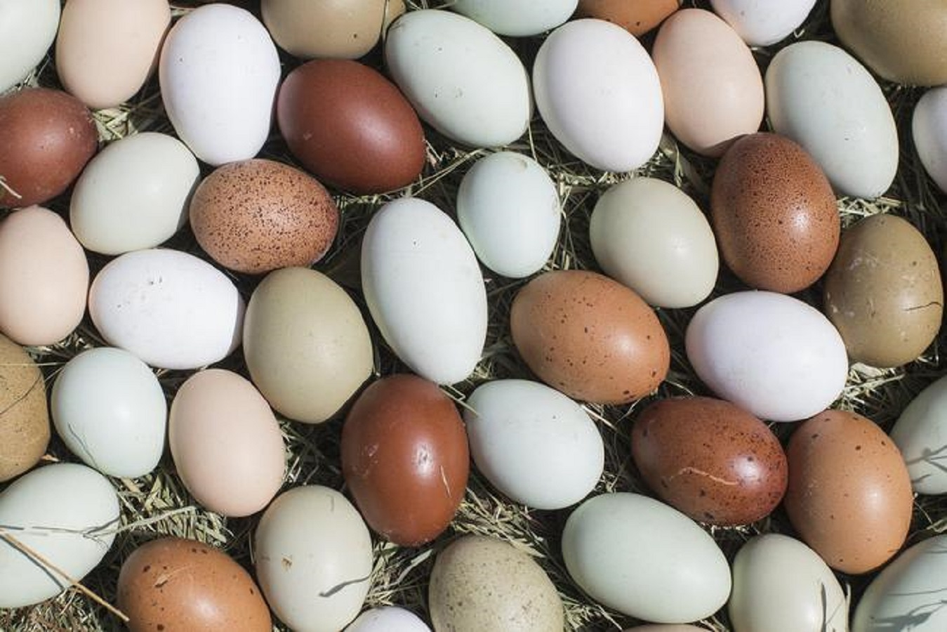 Uova e malattie cardio vascolari: cosa dice un nuovo studio