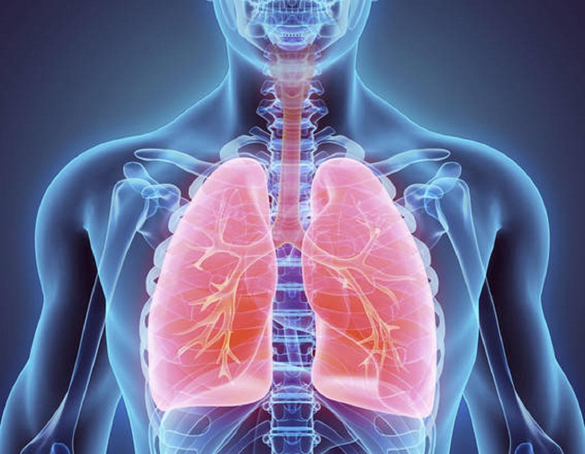 Dieta dei polmoni: alimenti che favoriscono il benessere dell'apparato respiratorio
