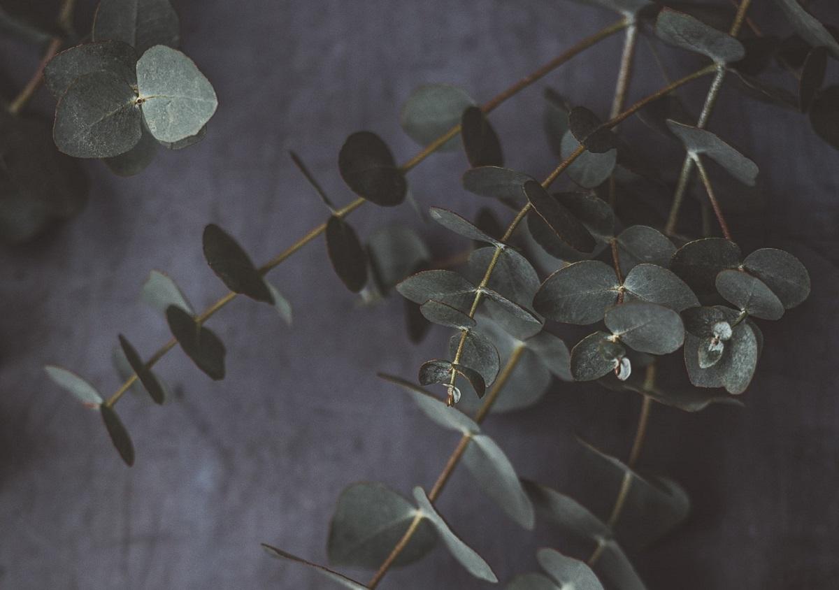 eucalipto nella doccia