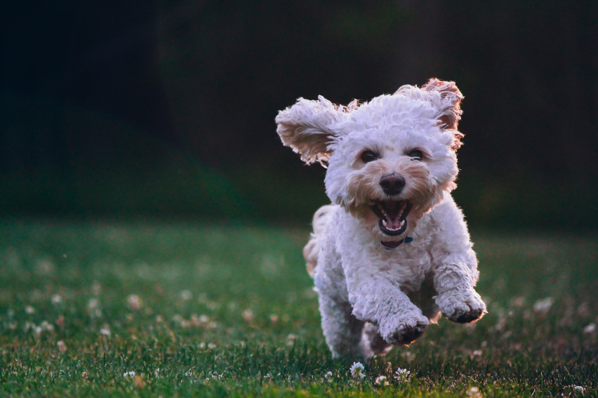 un cane che corre