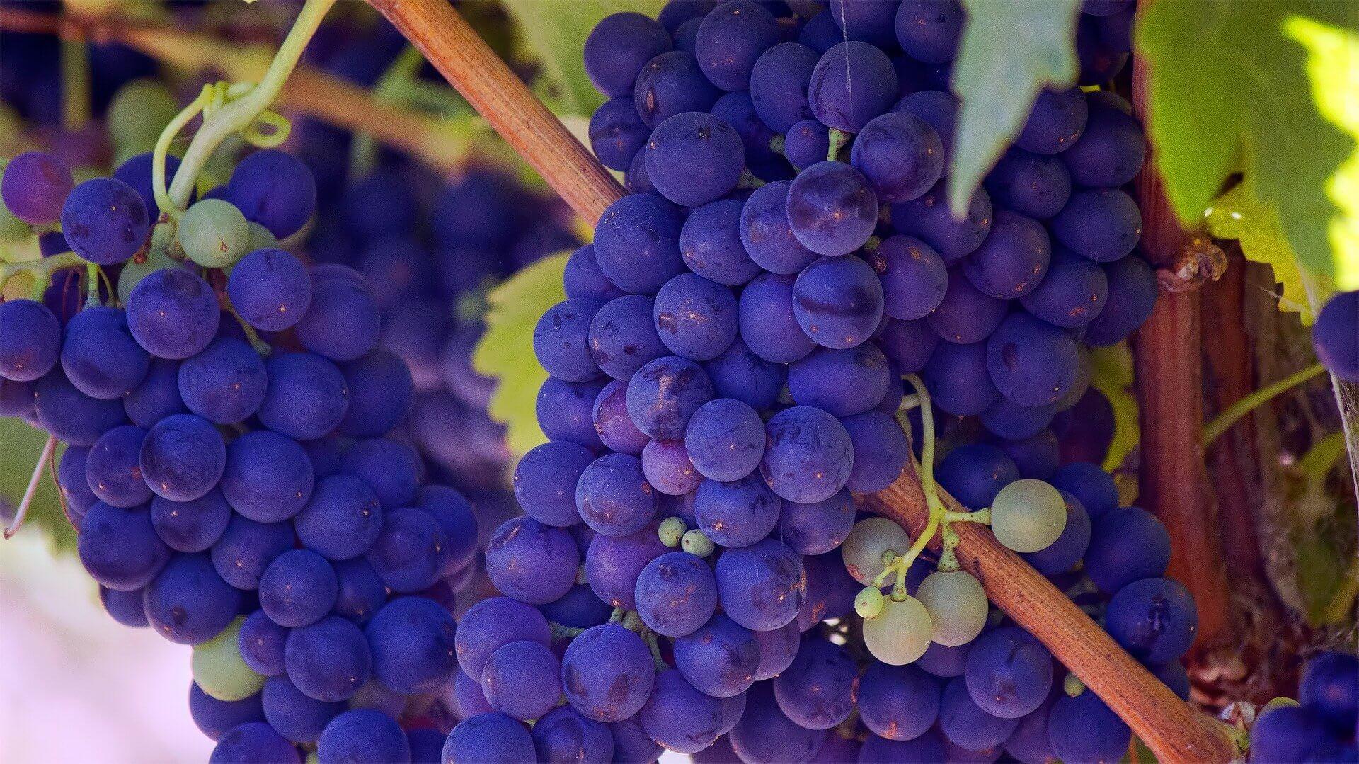 Dalle mele ai melograni: i benefici della frutta autunnale