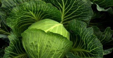 Dieta ricca di vitamina K, rischio inferiore fino al 34% di malattie cardiovascolari