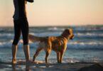ragazza al mare con il cane